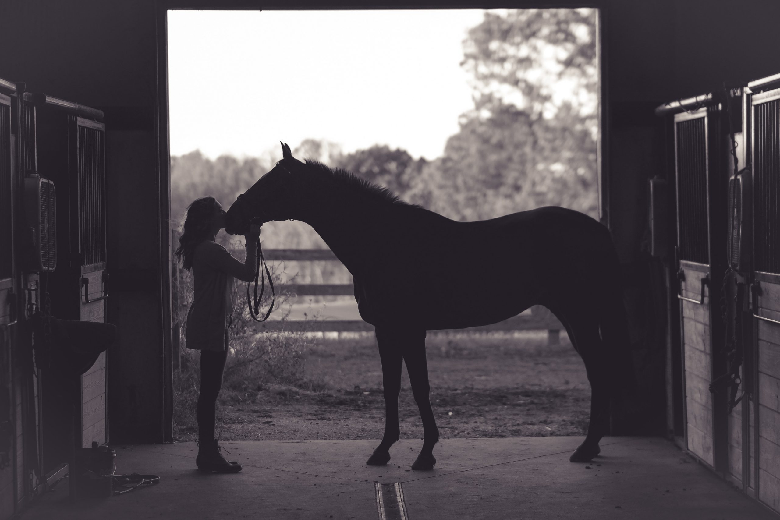 Heroes with Hooves: Benefits of Equine Therapy for Teen Girls